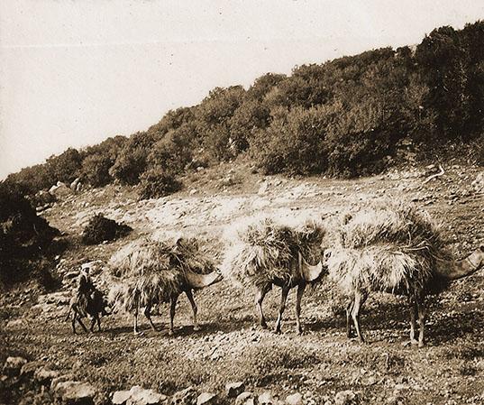 Camello en los alrededores del Muhraqa